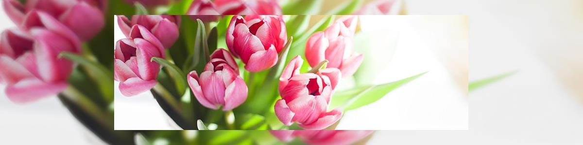פרח מתוק - תמונה ראשית