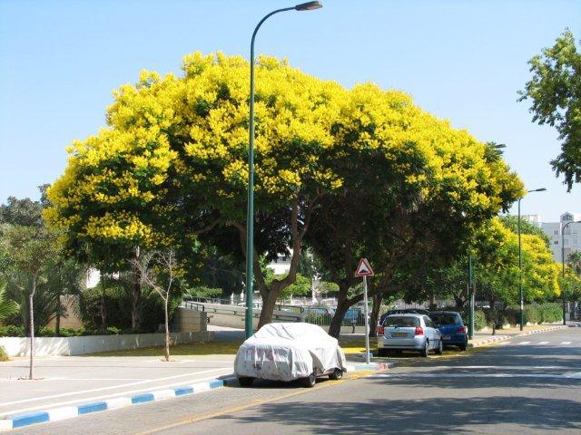 עיצוב והעתקת עצים