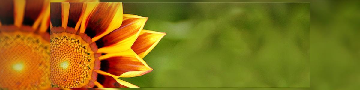 רפואה טבעית וייעוץ פסיכותרפי-אירית קראוזה - תמונה ראשית