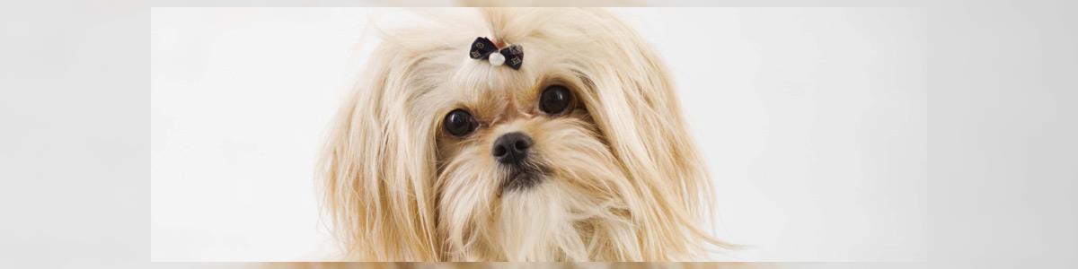 דוגשיק מספרת כלבים ניידת - תמונה ראשית