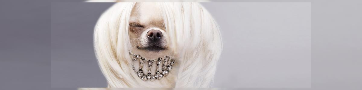 נוי נוי מספרת כלבים - תמונה ראשית
