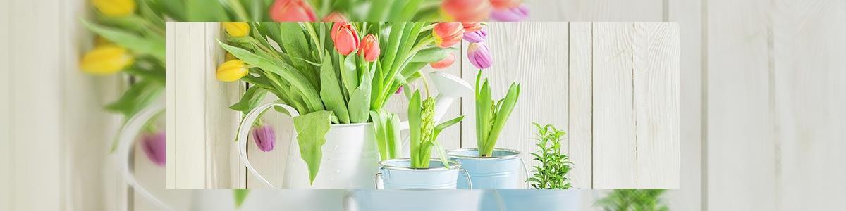 חנות הפרחים של אורלי - תמונה ראשית