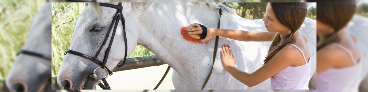 חוות תות - חוות סוסים - תמונה ראשית
