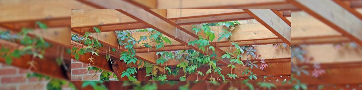 אלבי בניה ויזמות - עבודות עץ - תמונה ראשית