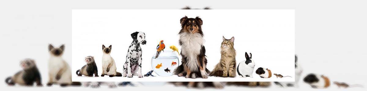 חיות וחוויות- הכל לחיות מחמד - תמונה ראשית