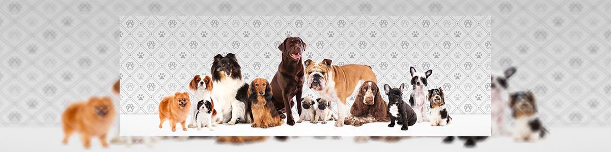 אילוף כלבים- משמעת והגנה - תמונה ראשית