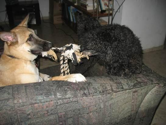 גלריית תמונות של אילוף שכלבים אוהבים