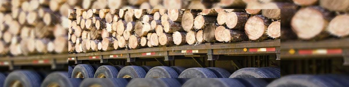 יקיר גיזום וכריתת עצים - תמונה ראשית