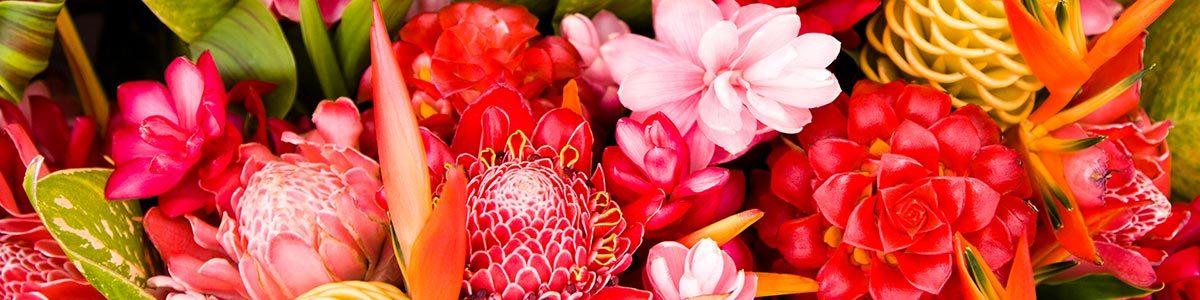 משתלת פרחי העמק - תמונה ראשית