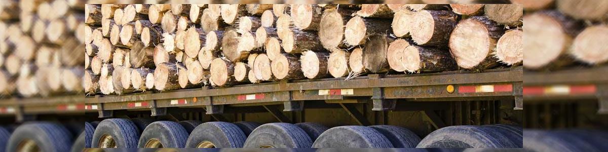 אורי גיזומים וכריתת עצים מסוכנים - תמונה ראשית