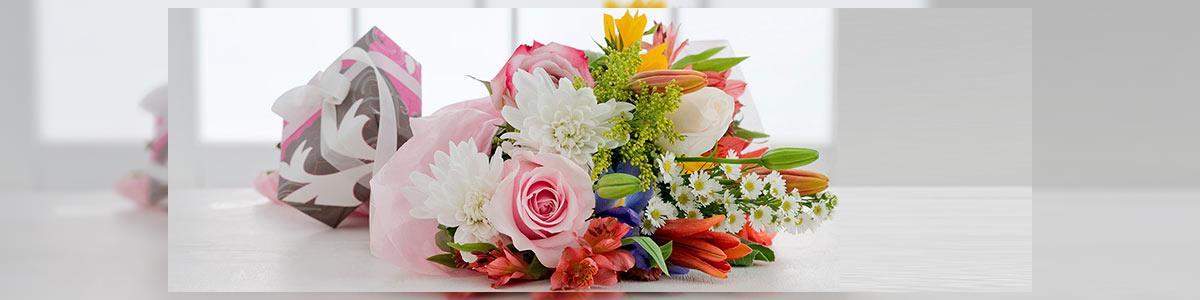מרכז הפרח - תמונה ראשית