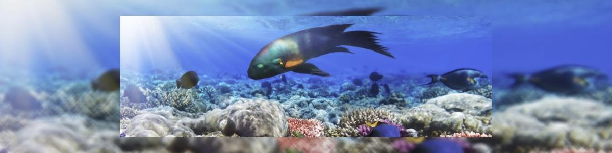 דג המשאלות בת ים - תמונה ראשית
