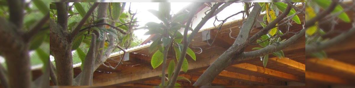 זאגי-אמינות ואיכות בעץ - תמונה ראשית