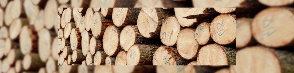 אבירן גיזום וכריתת עצים - תמונה ראשית