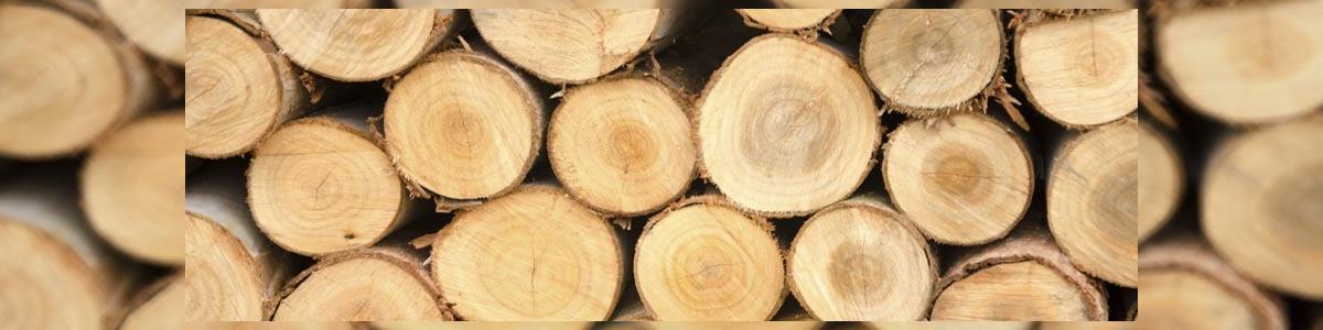 MAYA- גיזום עצים - תמונה ראשית