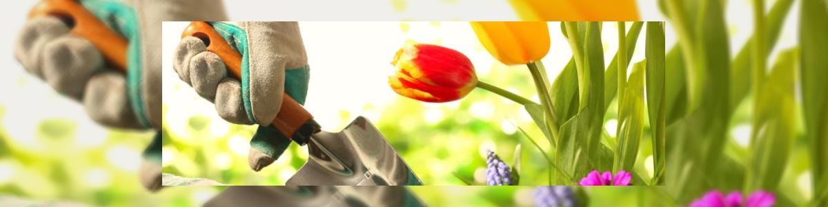 צמחים וחיוכים - תמונה ראשית