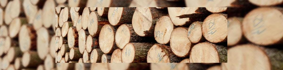 אילנות גיזום וכריתת עצים - תמונה ראשית