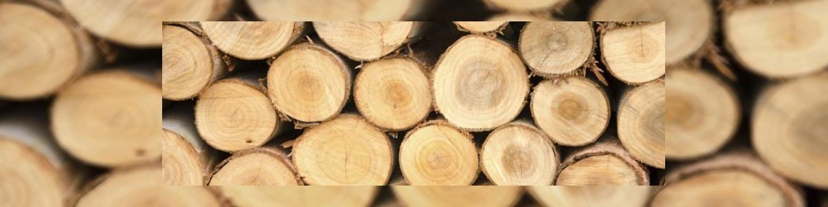 מאור הכהן גיזום וכריתת עצים - תמונה ראשית