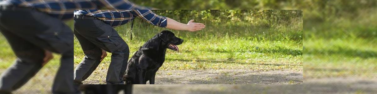 Alpha Dog - תמונה ראשית