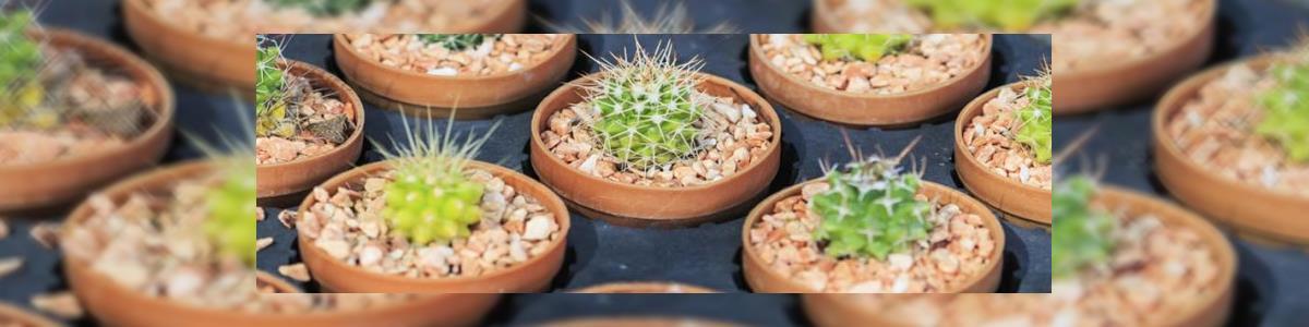 משתלת עולם הצמחים - תמונה ראשית