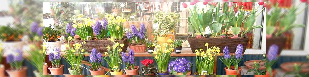פרחים במשתלה- חנות פרחים מבית המשתלה של ויקטור - תמונה ראשית