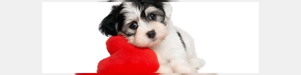 i love pets - תמונה ראשית