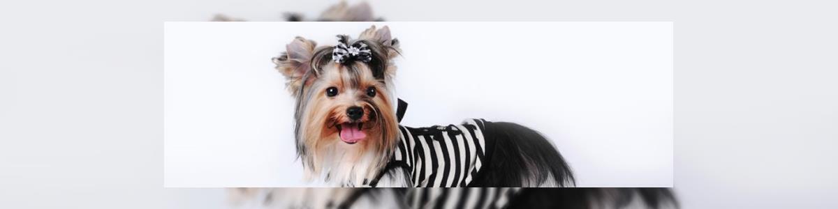 BONNY ספרות כלבים - תמונה ראשית