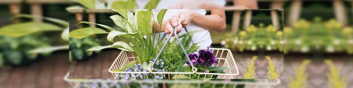 Flower Market - תמונה ראשית