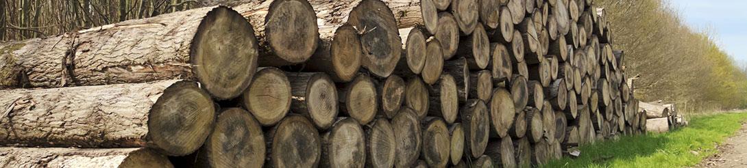מחירון גיזום עצים - כריתת עצים