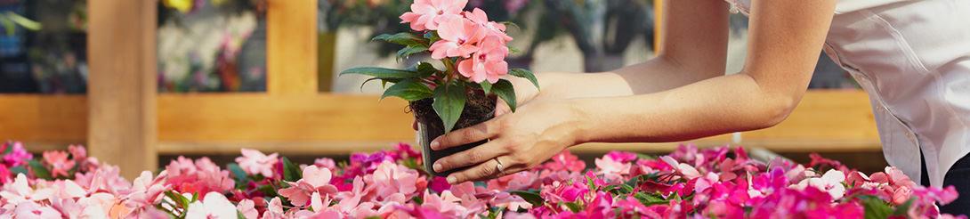 מחירון פרחים וצמחי נוי