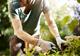 גינות גג, גינה אקולוגית או תכנון גינה פרטית - מה שצריך לדעת על תכנון גינה - תמונת המחשה