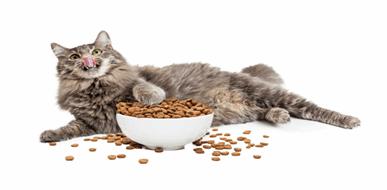 מזון לחתולים: איך נבחר את האוכל המתאים לחתול?  - תמונת המחשה