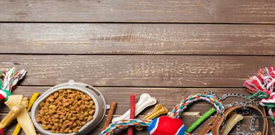 סוגי מזון לכלבים - איך בוחרים אוכל מתאים לכלב? - תמונת המחשה