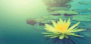 צמחייה ודגים לבריכות נוי - תמונת המחשה