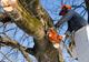 העץ הוא גבוה: מדריך לגיזום ולכריתת עצים