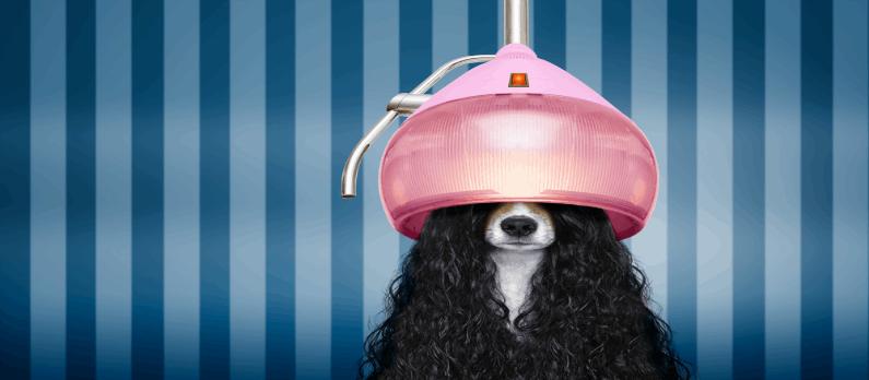 כתבות בנושא מספרות לכלבים וחתולים - תמונת אווירה