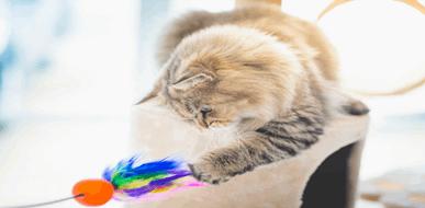 פעילות מומלצת עם כלבים וחתולים - תמונת המחשה