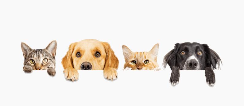 כתבות בנושא פנסיונים לכלבים וחתולים - תמונת אווירה