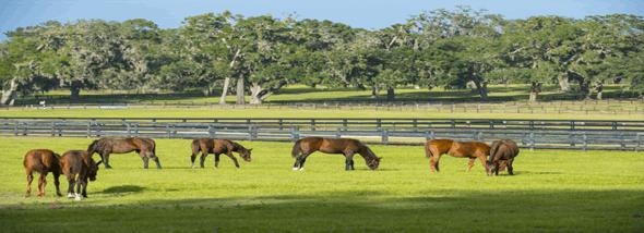 חוות סוסים: על חוויית הרכיבה ולמה היא טובה? - תמונת המחשה