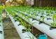 צמחייה הידרופונית - איך מגדלים, ומהם הצמחים הפופולאריים? - תמונת המחשה