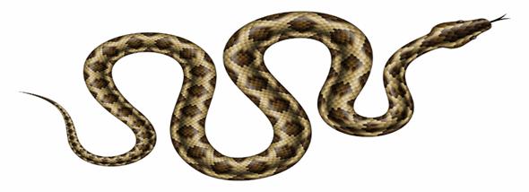 מה עושים כאשר נתקלים בנחש בבית או בגינה? - תמונת המחשה