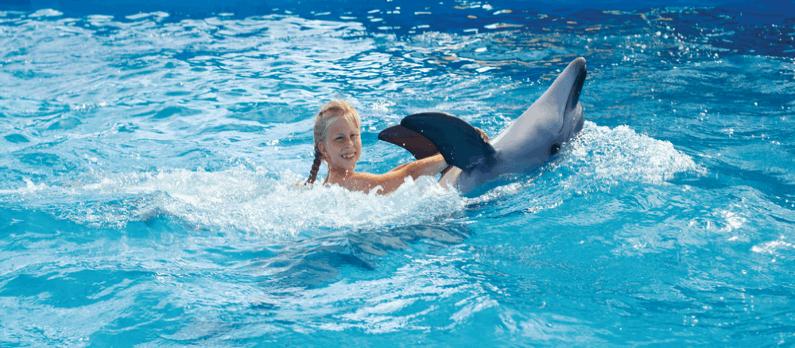 כתבות בנושא טיפול באמצעות בעלי חיים - תמונת אווירה