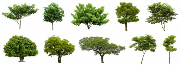 העתקת עצים - אם רק רוצים, אפשר גם להזיז עצים - תמונת המחשה
