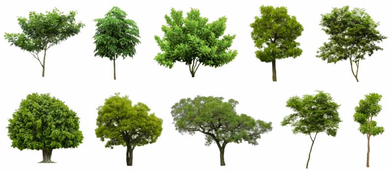 כתבות בנושא גיזום וכריתת עצים - תמונת אווירה