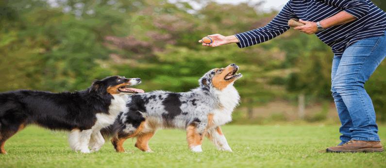 כתבות בנושא אילוף כלבים - תמונת אווירה
