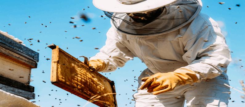 כתבות בנושא דבש - תמונת אווירה