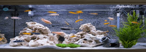 אקווריומים חכמים: ים של יוקרה עם מינימום תחזוקה - תמונת המחשה