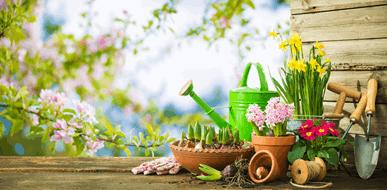 ורד לקיץ יקינתון לחורף: מילון הפרחים לכל עונות השנה - תמונת המחשה