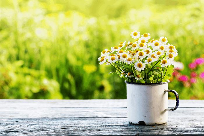 פרחים לפי עונות: תמונה להמחשה