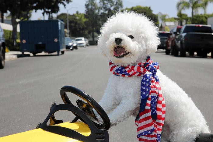 איך לאלף כלב ? :תמונה שאטרסטוק
